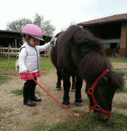 una bambina spazzola un pony