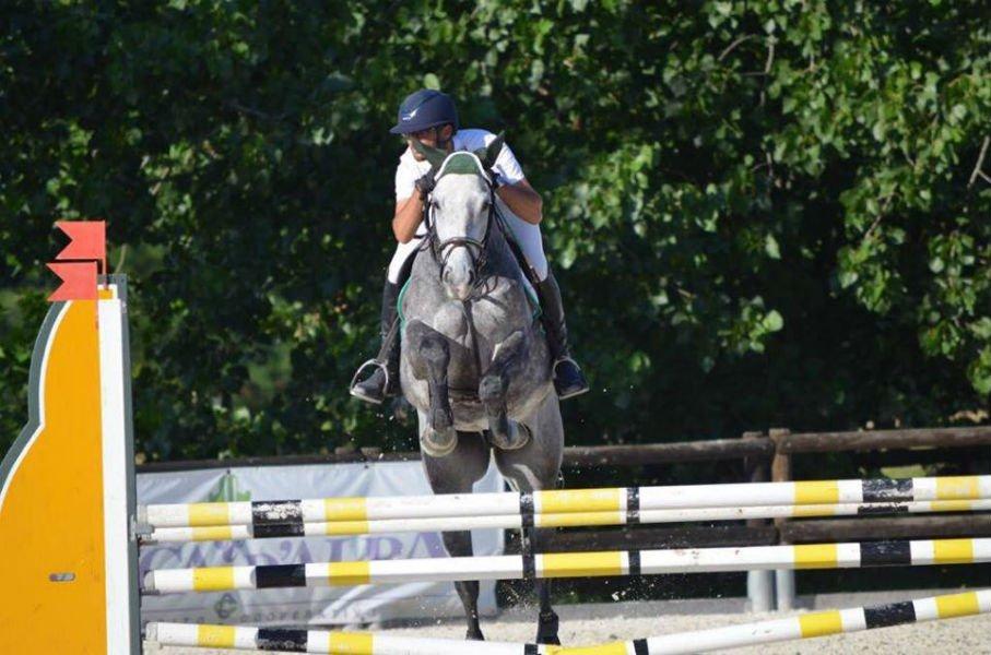 un cavallo salta un ostacolo con un cavallo grigio