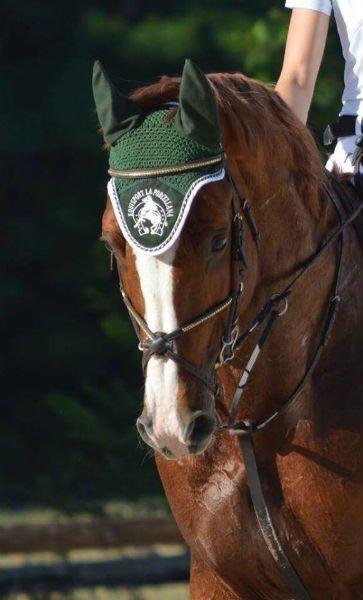 un cavallo con copriorecchie La Pocellana