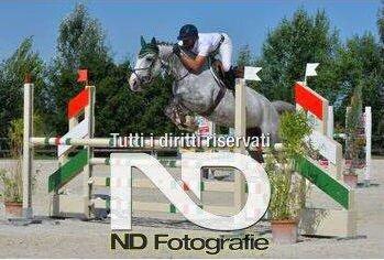 salto ad ostacoli con cavallo