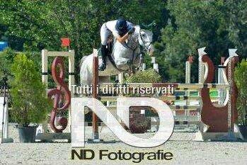 un cavallo salta l'ostacolo durante una gara