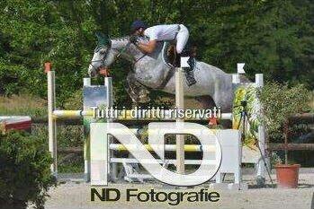durante una gara di equitazione