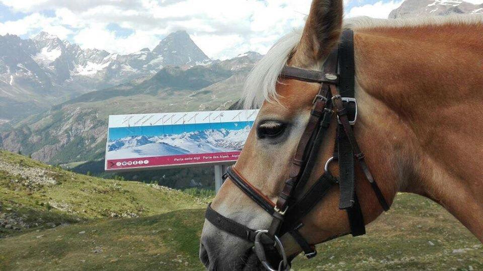 il viso di un cavallo visto di lato