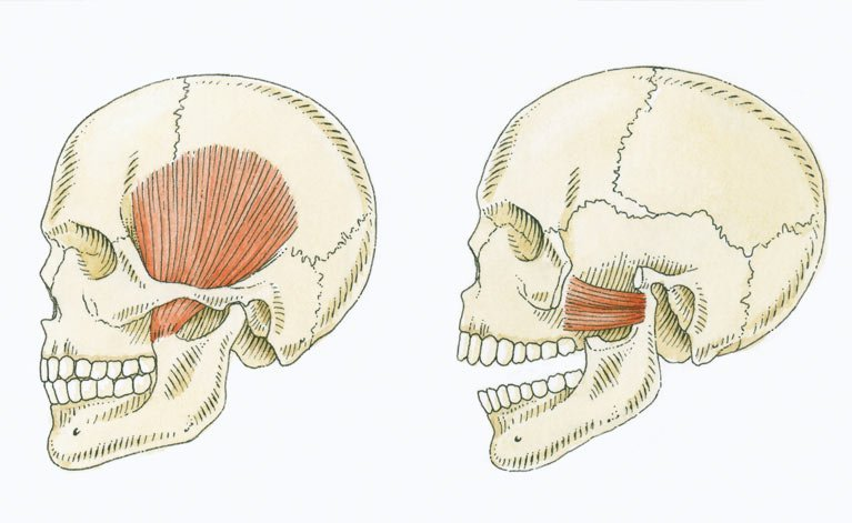 skulls showing pain in jaw
