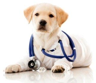 visite veterinarie, visite veterinarie di routine, visite specialistiche