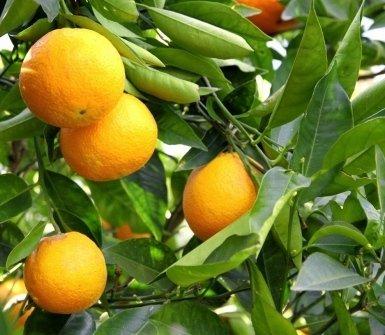 arance, agrumi
