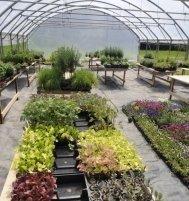 piante da orto, piante da siepe