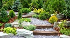 piante da terrazzo, rampicanti