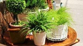 piante ornamentali, piante da interni