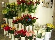 fiori in vasi