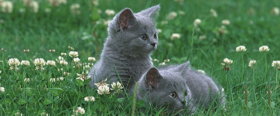 identical cats