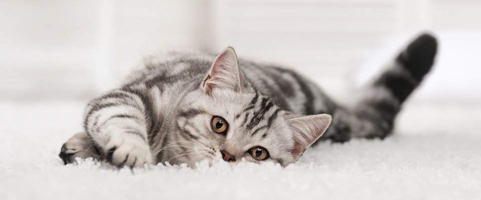 a cat looking