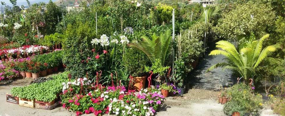 coltivazione fiori e giardinaggio messina messina