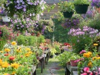 giardini terrazzati