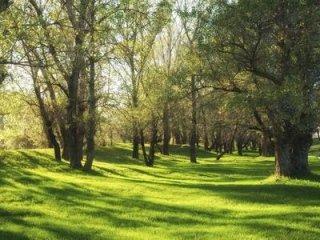 allestimento giardini e parchi