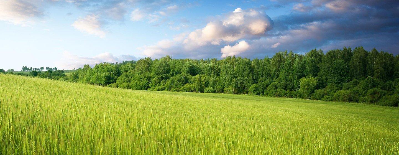 Paesaggio con prati e alberi