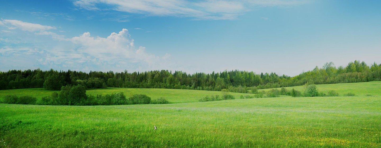 paesaggio con prati verdi
