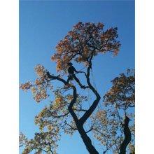 Firewood - Evesham - Ancient Oaks Tree Surgeons - Tree Surgery