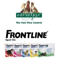advantage; frontline