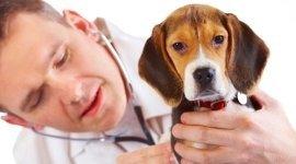 animali da compagnia, laparoscopia