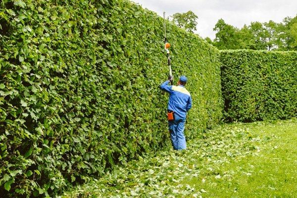 operatore tagliando le piante