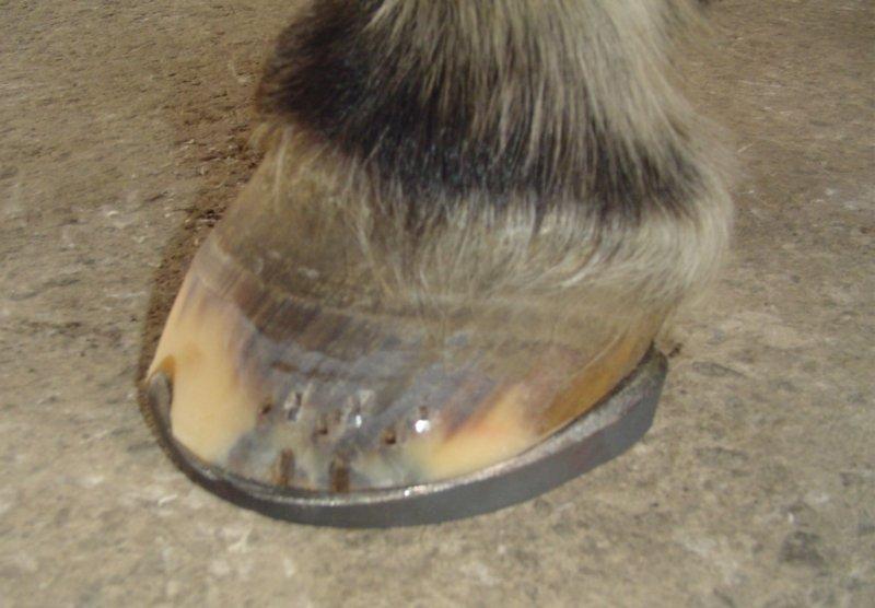Graduated heel