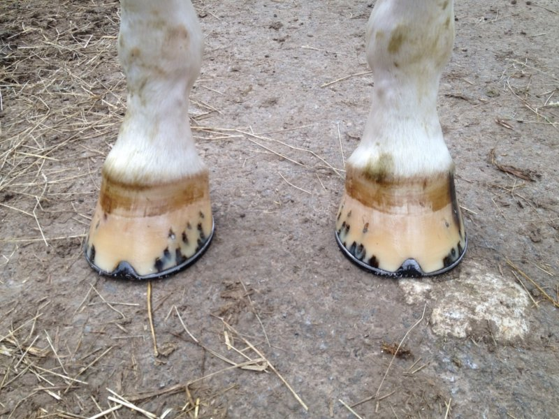 Everyday shoeing