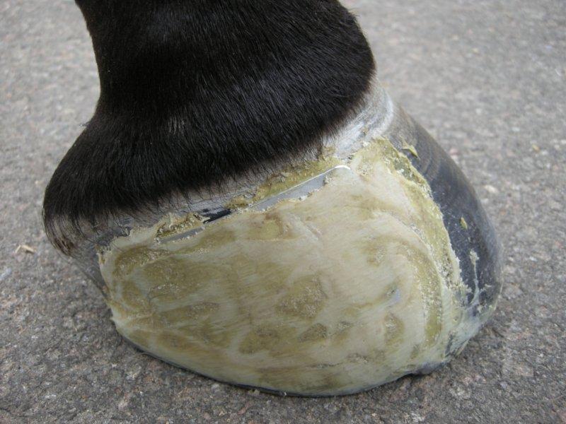 Crack plate 2