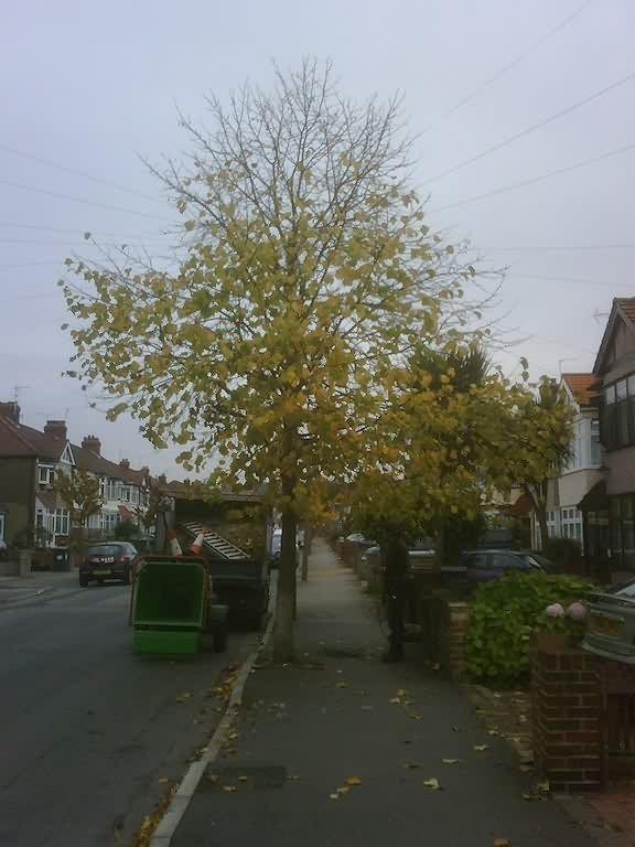 tree on the footpath