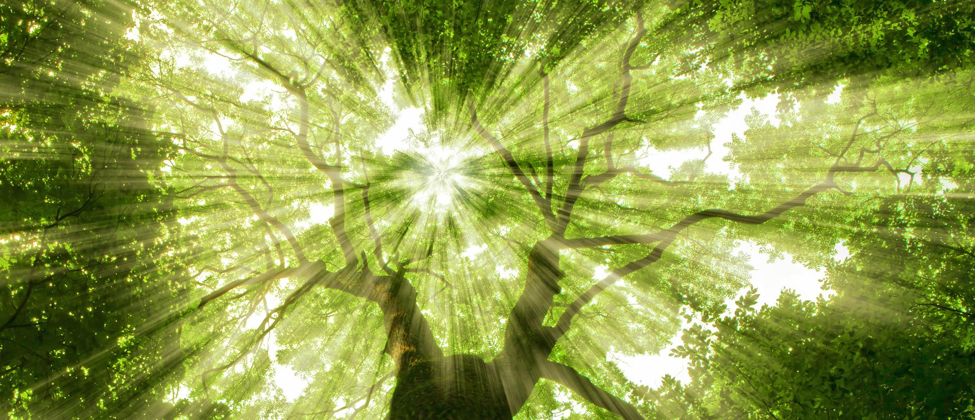 sun rays through the tree leaves