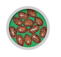 dei semi di ricino