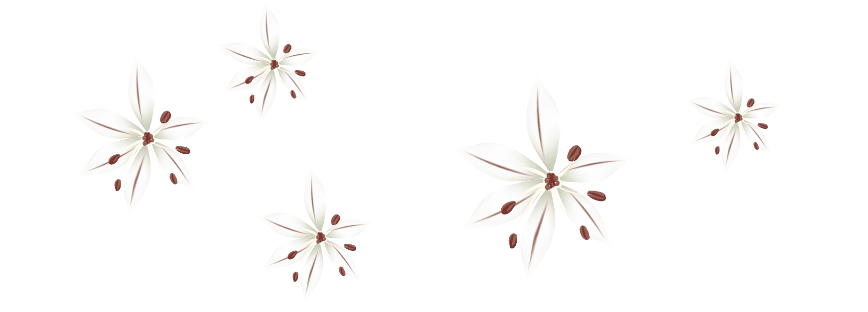 white and brown flowers