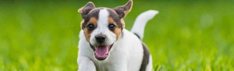 toelettatura cani figaro dog
