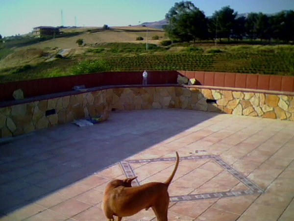 cane  su un cantiere edile