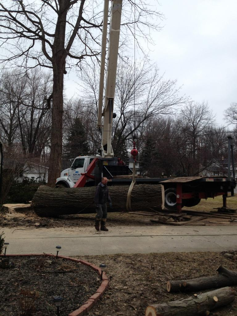 tree removal Wickliffe, OH