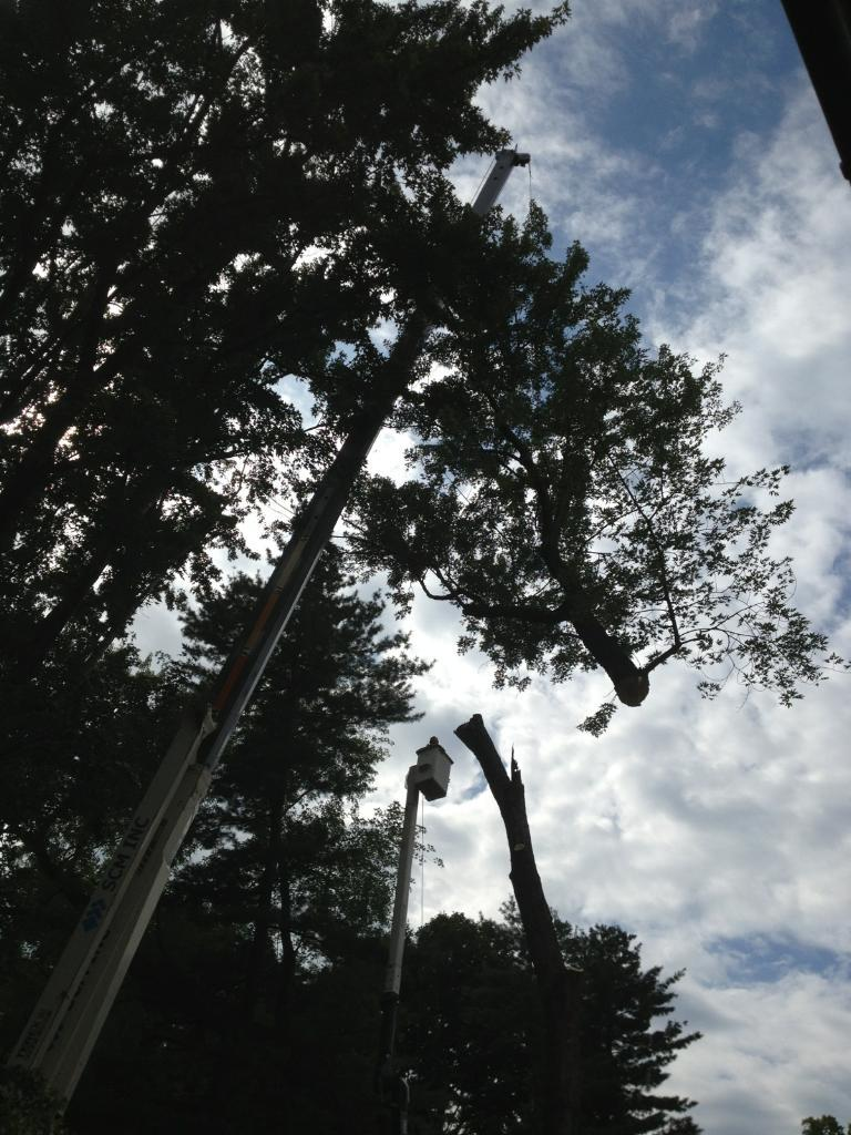 emergency tree service Wickliffe, OH