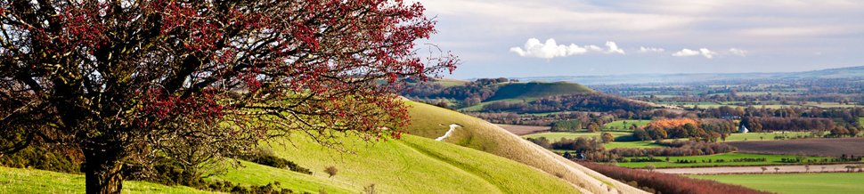 A berry tree atop a hill, with a beautiful country vista