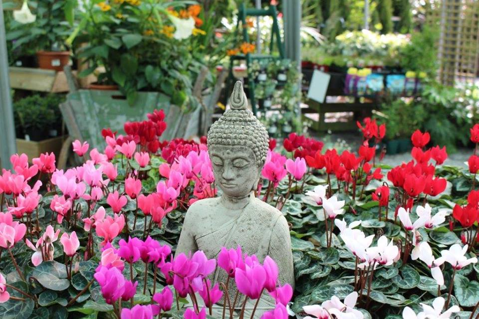 Lilly and lotus flowers with an idol of gautama buddha