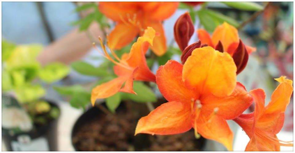 Orange colour flowers