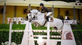 affido cavalli, custodia del cavallo, cura del cavallo
