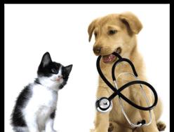 Visita veterinaria