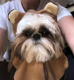 Ewok Halloween costume for Shih Tzu