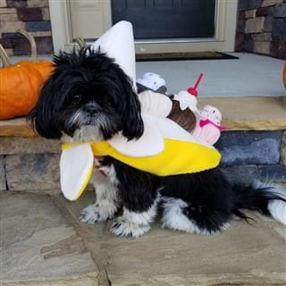 ice cream costume for dog