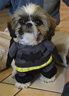 Batman costume for dog