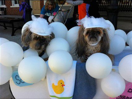 shih-tzu-bubble-costume