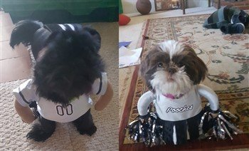 Shih Tzu Cheerleader Costume