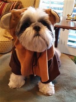shih-tzu-halloween-ewok-costume