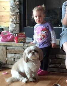 Shih Tzu with little girl