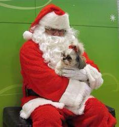 Shih Tzu with Santa Clause