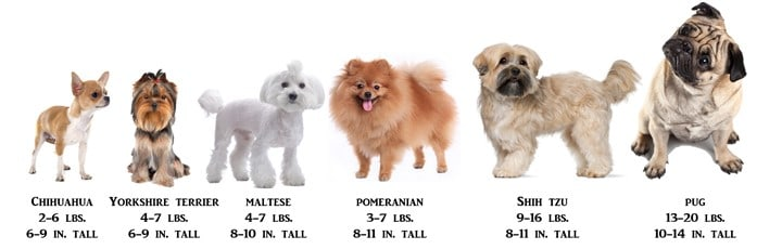 size-chart-shih-tzu-to-other-dogs